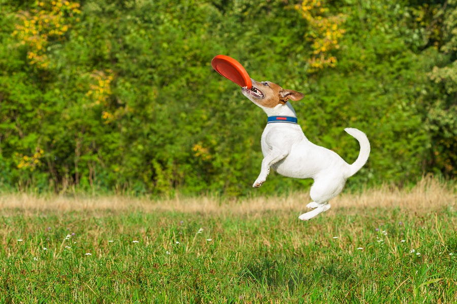 DISC communication exercise is not quite the same as dog exercising with his frisbee disc